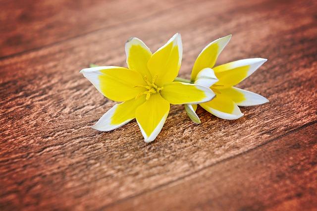 dřevo, žlutébílé květiny