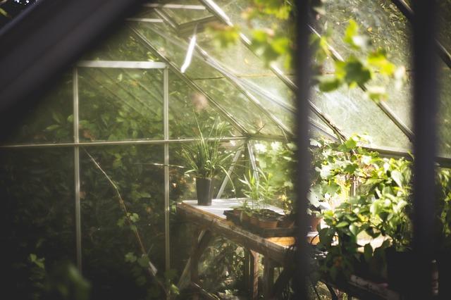 Vegetace ve skleníku